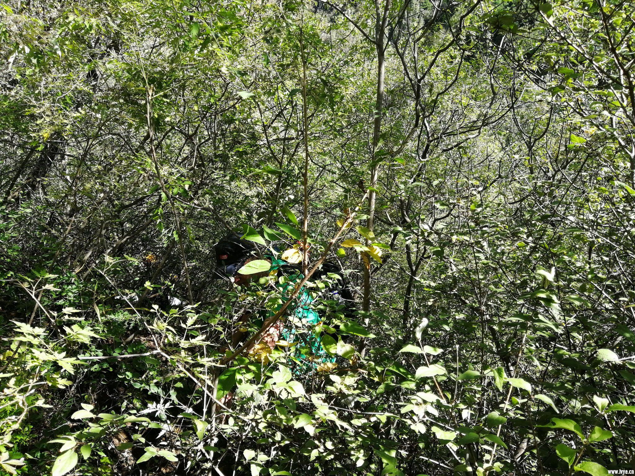 06 穿行于茂密的灌木丛 IMG_4124_resize.JPG