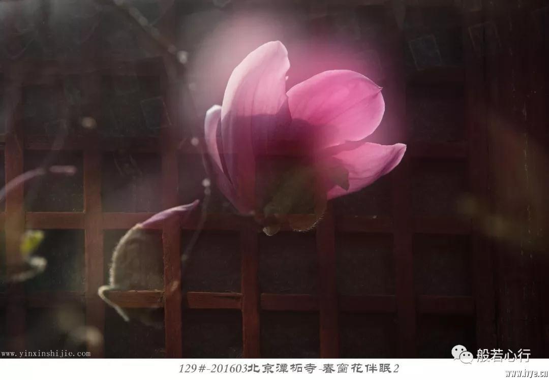 129#-201603北京潭柘寺-春窗花伴眠2.jpg