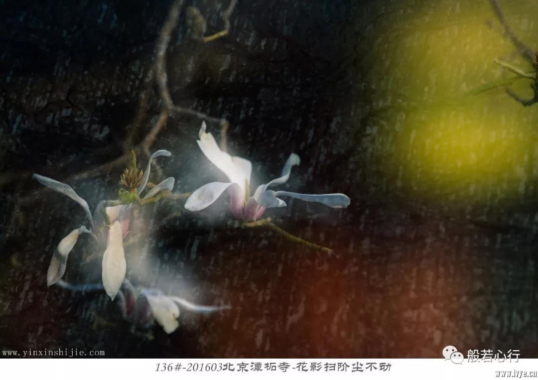 136#-201603北京潭柘寺-花影扫阶尘不动.jpg