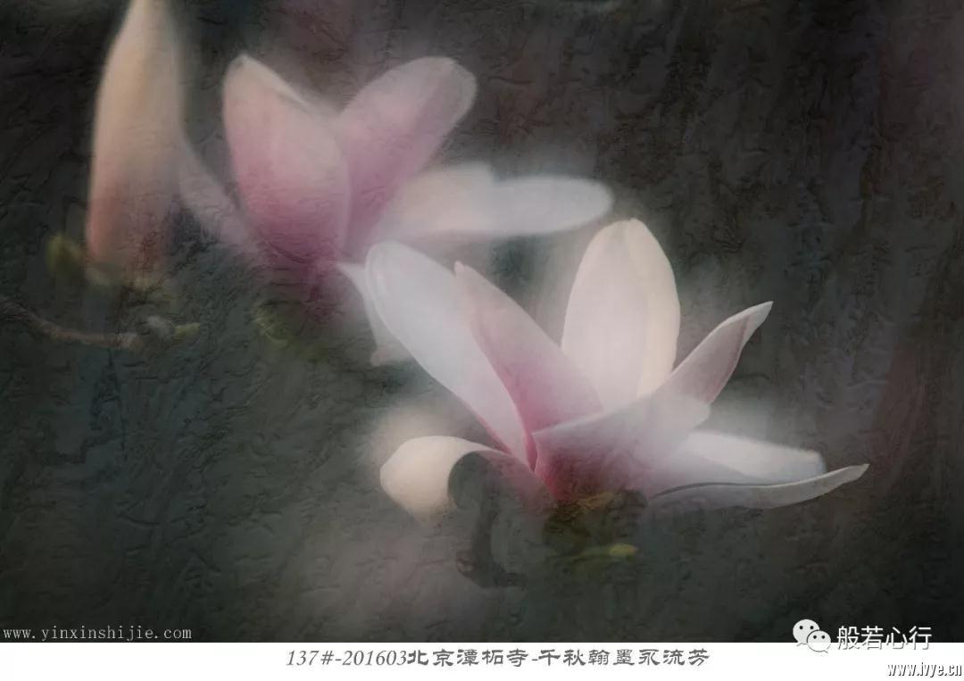 137#-201603北京潭柘寺-千秋翰墨永流芳.jpg
