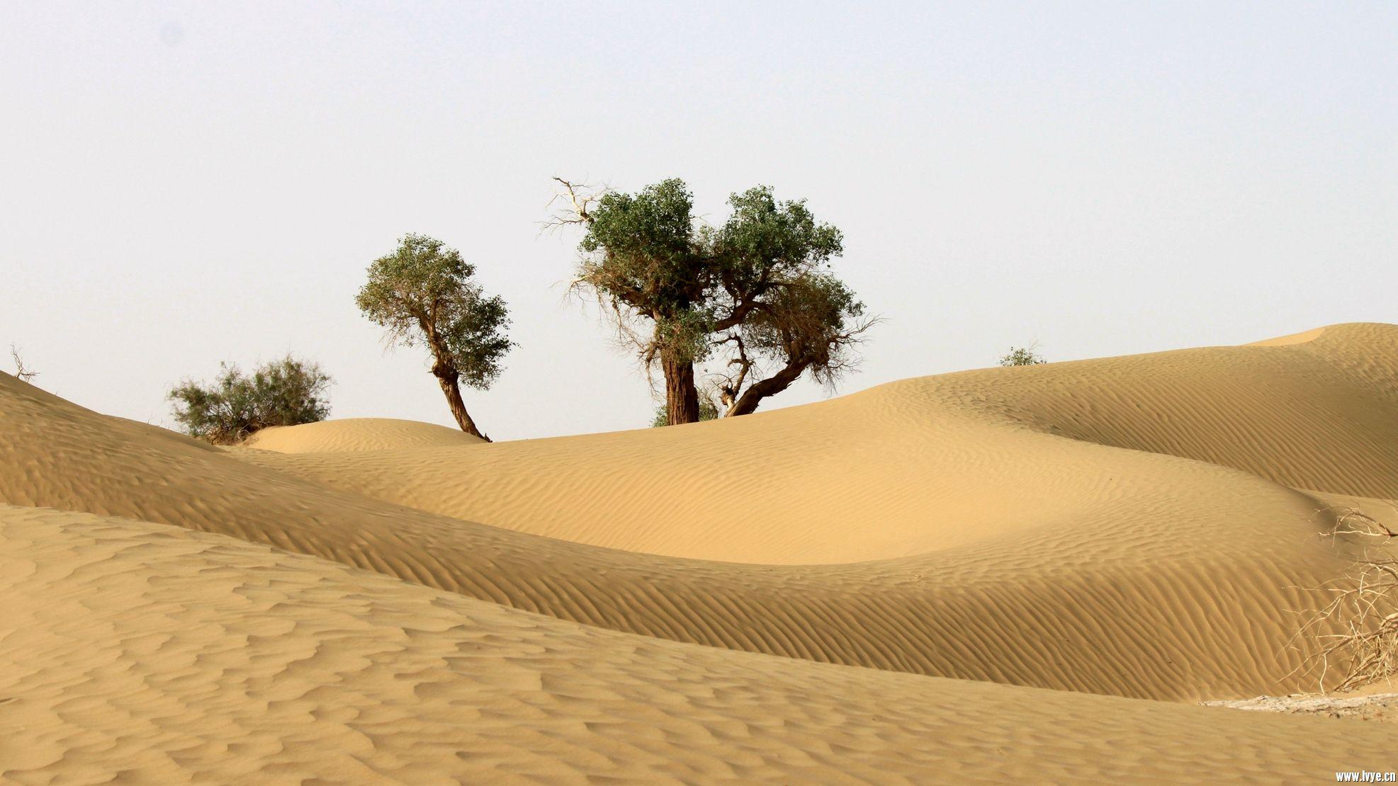 塔克拉玛干沙漠公路 (4).jpg