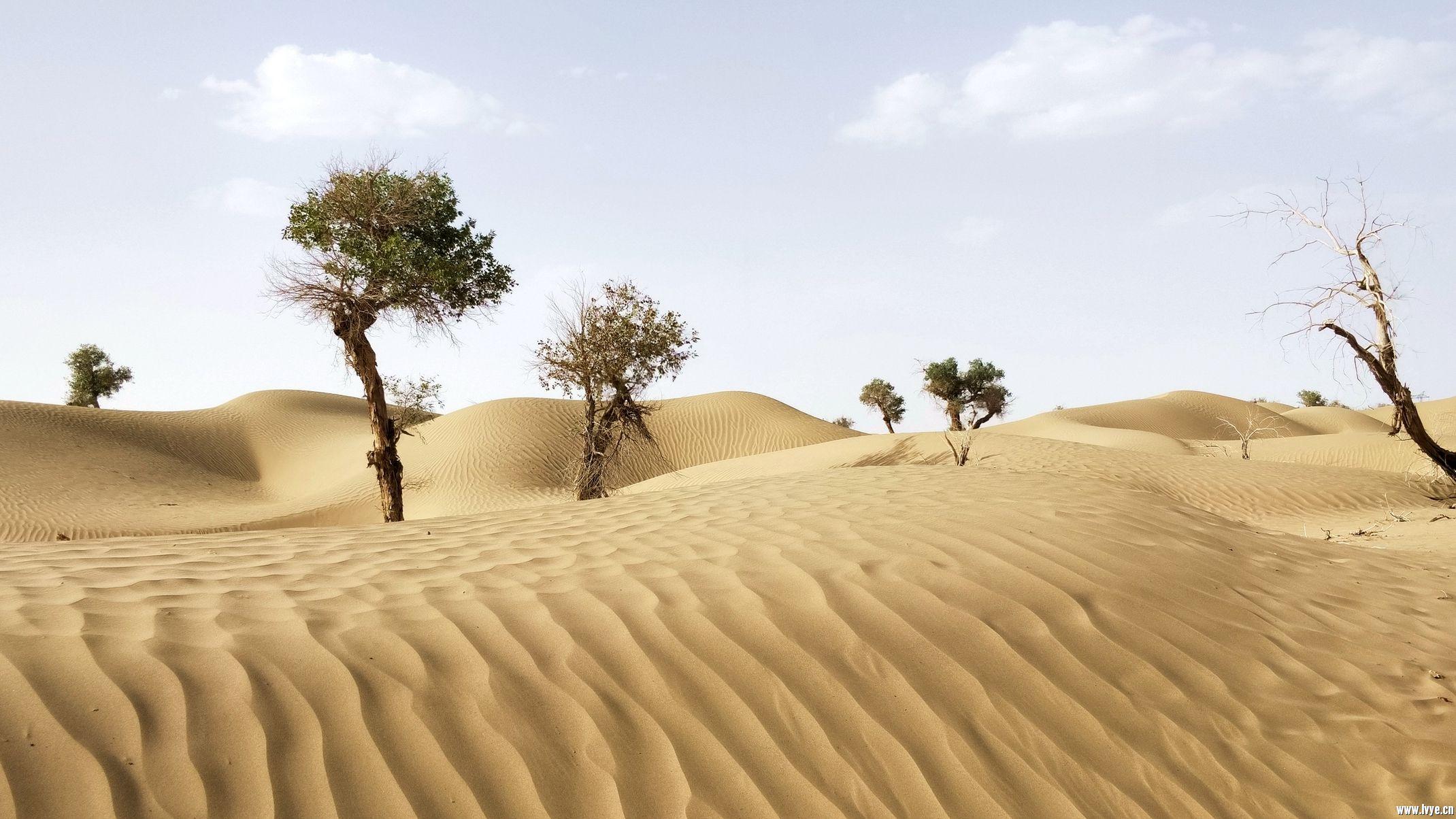 塔克拉玛干沙漠公路 (9).jpg