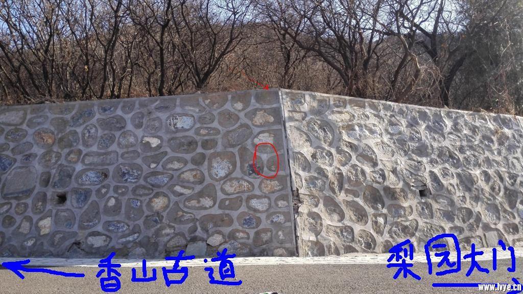 馒头山-梨园 下口处.jpg