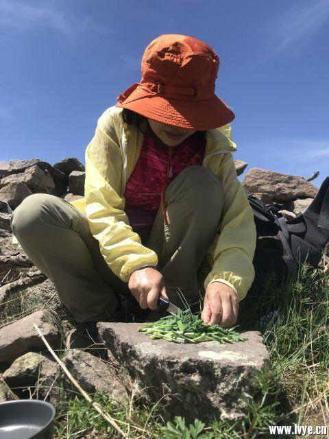 岩石上切韭菜.jpg