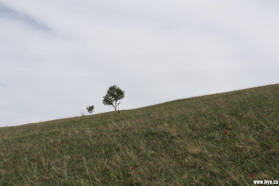 树风景.jpg