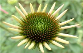 《太阳花》——倚窗听歌