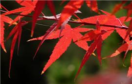 《秋红》——微醺的岁月