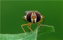 《小小食蚜蝇 》——微醺的岁月