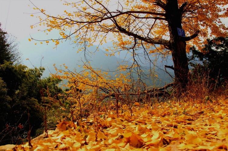 南方之秋----那一抹淡淡的秋色