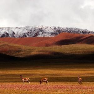 大美西藏-尼瑪戈壁[多圖]