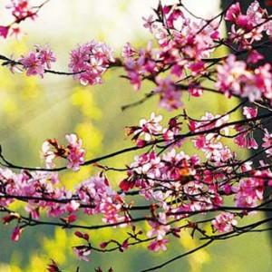 春暖花開 京城遛彎賞春好去處