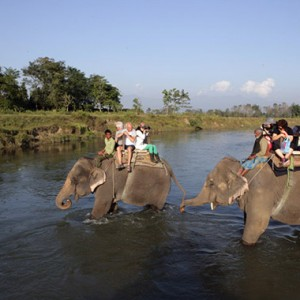尼泊爾殺人大象過勞死 大象叢林探險管理缺失
