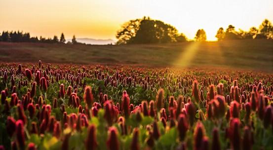 想亲近大自然?中粮智慧农场圆您都市田园梦