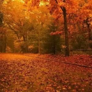 十一月国内最佳旅行地!美极了,总有一个让你心动!