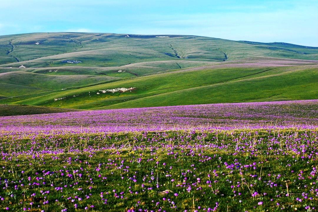 壁纸 草原 成片种植 风景 植物 种植基地 桌面 1080_723