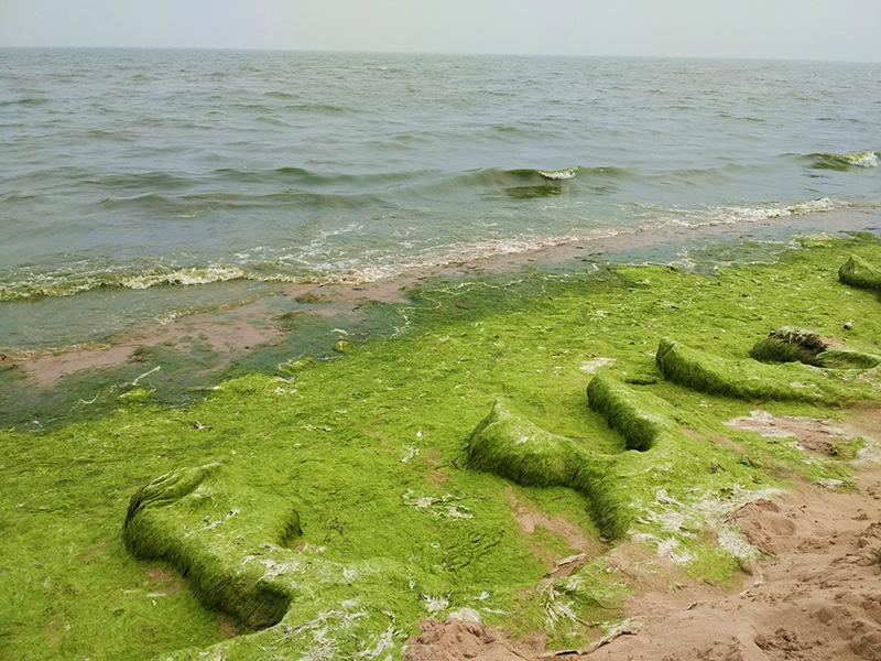 公益清海 保护海洋 清洁海滩 我们在行动