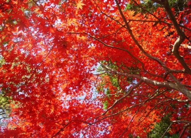 醉美秋色|距东京2、3小时的近郊红叶之旅