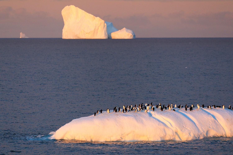 南極有啥好玩的