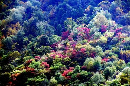 毕棚沟,红叶彩林观赏时间早又长,一沟数十里层林尽染
