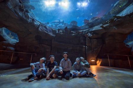 """香港海洋公园推出全新小小""""网红""""系列活动"""