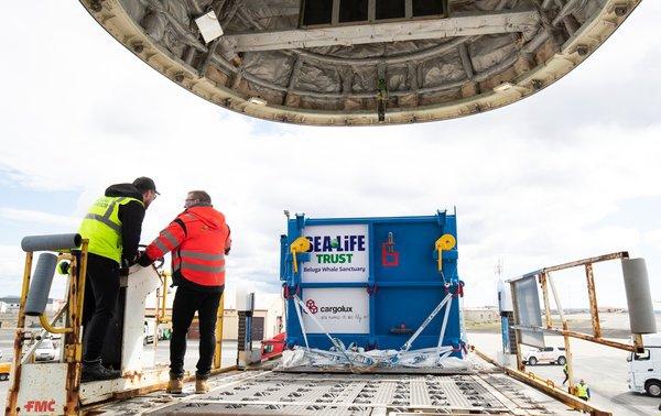 白鲸安全抵达冰岛