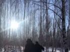 初冬的漠河白桦林
