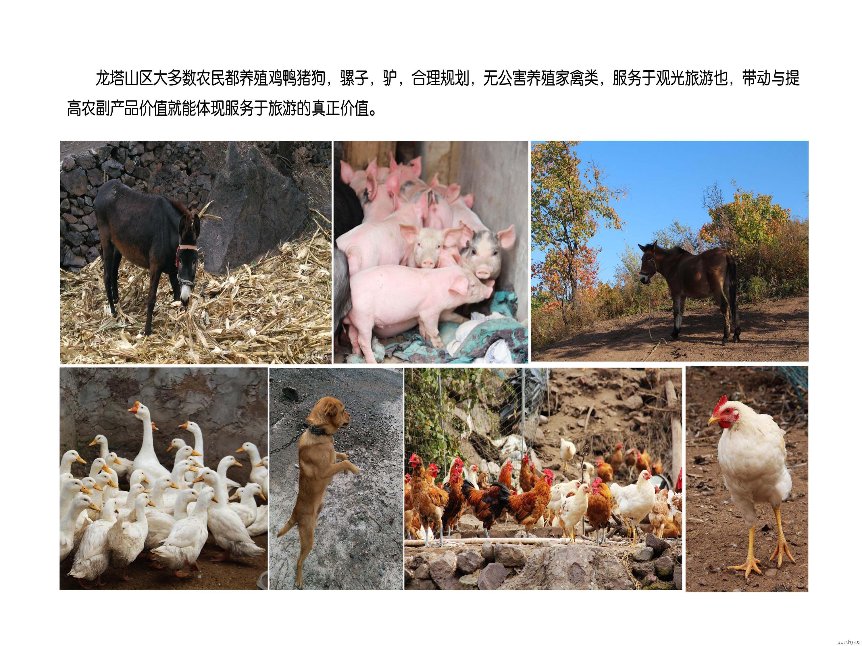 23农家养殖业副本.jpg