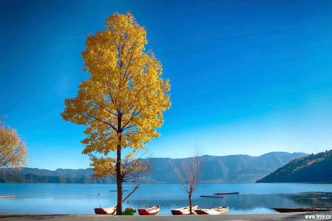 有一种幸福叫 在云南 ,有一种遗憾叫 冬天没到过滇西