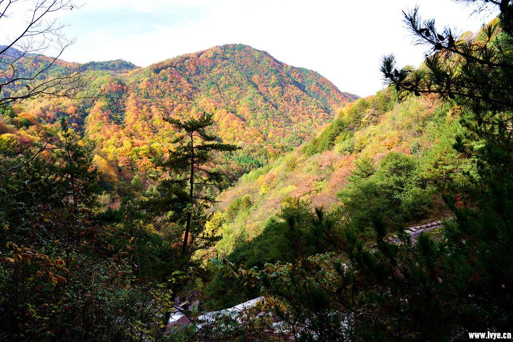 萬山紅遍顯秋色 層林盡染勝春花